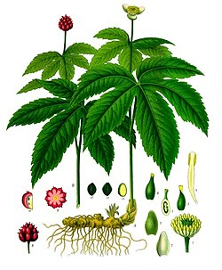 meaning of goldenseal