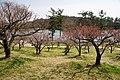 Hyogo Prefectural Flower Center Kasai Japan14n.jpg