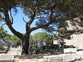 Ialisos, Greece - panoramio (24).jpg