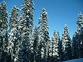 Ilgaz snow.JPG