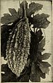 """Image from page 100 of """"Dreer's garden book 1915"""" (1915) (14598433968).jpg"""