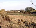 Ingrebourne Valley south of Hornchurch - geograph.org.uk - 1037676.jpg