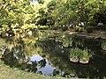 Iris Pond of Kashii Shrine 7.jpg