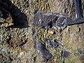 Ironstone pebbles in quartz-pebble conglomerate (Sharon Conglomerate, Lower Pennsylvanian; Jackson North roadcut, Ohio, USA) 8 (37676707346).jpg