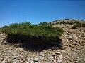 Isla del Ciervo0653.jpg