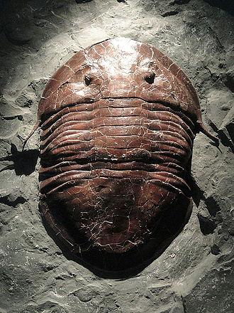Ископаемые остатки изучает палеонтология