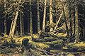 Ivan Shishkin - Wind-Fallen Trees.JPG