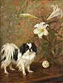 Japanese Chin on a table by Frances C. Fairman.jpg