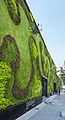 Jardín vertical en la Universidad del Claustro de Sor Juana, calle Regina, México D.F., México, 2013-10-16, DD 01.JPG