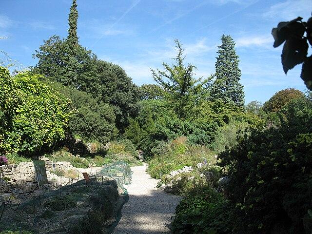 Le jardin de l'École de Botanique