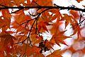 Jardin japonais Toulouse (8602194337).jpg