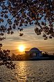 Jefferson Memorial Spring1.jpg