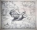 "Johannes Hevelius - Prodromus Astronomia - Volume III ""Firmamentum Sobiescianum, sive uranographia"" - Tavola LL - Capricornus.jpg"