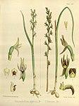 Joseph Dalton Hooker - Flora Antarctica - vol. 3 pt. 2 plate 112 (1860).jpg