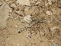 Judean Desert IMG 1803.JPG