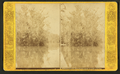 Junction, Silver Springs Run & Oklawaha, from Robert N. Dennis collection of stereoscopic views.png