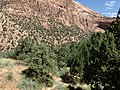 Juniperus osteosperma kz03.jpg