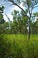 Kakadu National Park-20 (8309758414).jpg