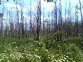 Kalininsky District, Tver Oblast, Russia - panoramio (26).jpg