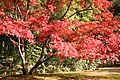 Katsura Rikyu (3264632430).jpg