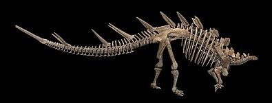 Kentrosaurus aethiopicus 01.jpg