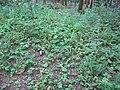 Kermeter Walderdbeeren01.jpg