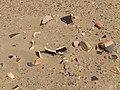 Kharakhoto 2016 pottery shards 1.jpg