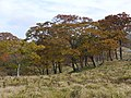 Kimigahatacho, Higashiomi, Shiga Prefecture 527-0202, Japan - panoramio (32).jpg