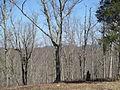 Kings Mountain National Military Park - South Carolina (8558913420) (2).jpg