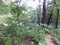 Kobe Municipal Arboretum in 2013-6-22 No,66.JPG