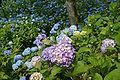 Kobe municipal forest botanical garden35n4272.jpg