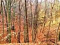 Kolorowy wąwóz - panoramio.jpg