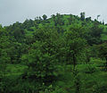 Konkan Railway - views from train on a Monsoon (1).JPG