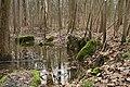 Kontrollierte Flutung des Auenwaldes - panoramio (1).jpg