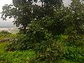 Kordara, Madhya Pradesh 485446, India - panoramio.jpg