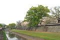 Kumamoto castle 熊本城 (458770177).jpg