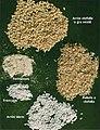 LPCC-771-Productes del gra d'arròs clofolla.jpg