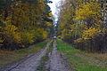 LSG Forst Rundshorn IMG 3704.jpg