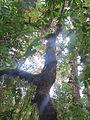 La Amistad Panama Biosphere Reserve - Parque Nacional Volcan Baru (a core zone) 13.JPG