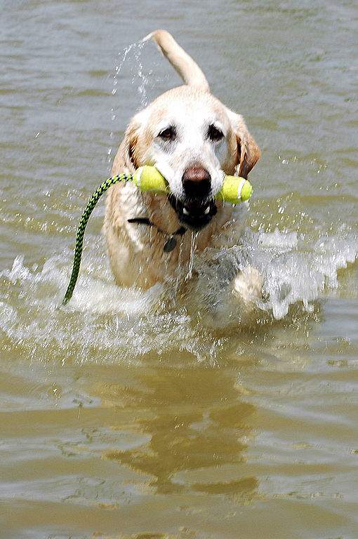Image Result For Dog Day Care