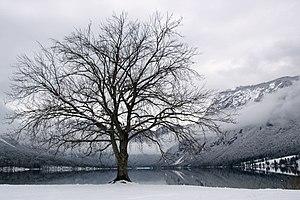 Tranquility by the Lake Bohinj