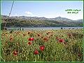 Lake of Taleghan, Alborz, Iran, Amirkhani - panoramio.jpg