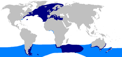 World map with dark blue coloring in the northern Atlantic Ocean, around southern South America, east of South Africa, and around southern Australia and New Zealand, and light blue coloring along the southeastern U.S. coast and in a global band around the Southern Hemisphere