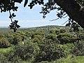 Landscape of Judea.jpg