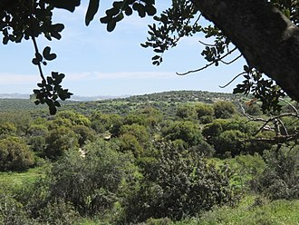 Adullam Grove Nature Reserve - General landscape of the Adullam-France Park in Israel