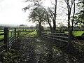 Lane, Freemanstown - geograph.org.uk - 1580975.jpg