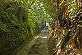 Lane to Loscombe - geograph.org.uk - 960805.jpg