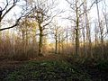 Langley Wood - geograph.org.uk - 108698.jpg