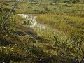 Lapland - Urho Kekkonen National Park - 20180728171234.jpg