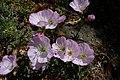 Last Flowers (4679711540).jpg